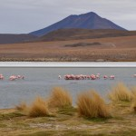 Eisige Kälte im Eduardo Avaroa Nationalpark