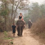 Mit Elefanten zum Fluss