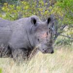 Liebesbrief Südafrika: Wilde Tiere und grandiose Landschaften.