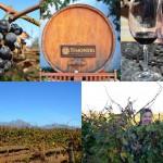 Südafrikanische Winelands bei Kapstadt