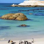 Pinguin Kolonie in Simons Town