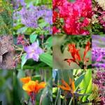 Blumenpracht im Botanischen Garten von Kirstenbosch