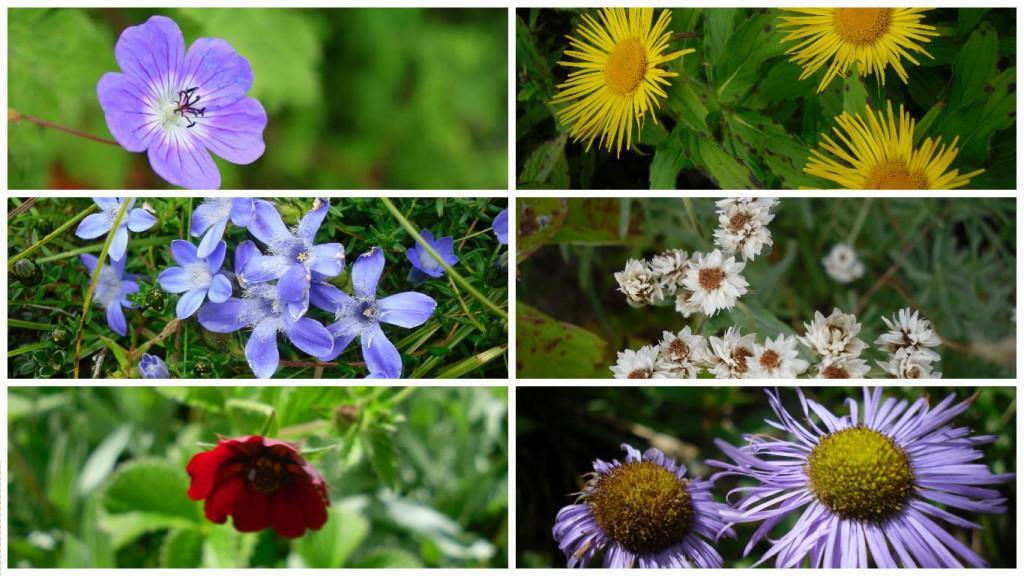 """520 verschiedene Blumenarten schmücken das """"Tal der Blumen""""."""