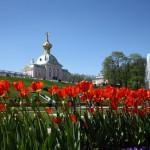 Blumenpracht Peterhof