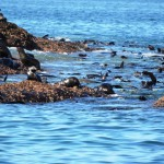Robben Siedlung bei Mosselbay