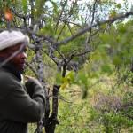 Auf der Pirsch im Krüger Nationalpark
