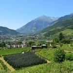 Apfelplantagen und Weinberge prägen die letzte Etappe unserer Alpenüberquerung.