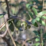 Schlange in den Baumwipfeln