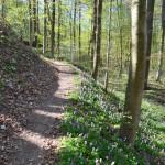Aufstieg zum Kloster Banz: Im Frühjahr blühen Blumen neben dem Wanderweg.