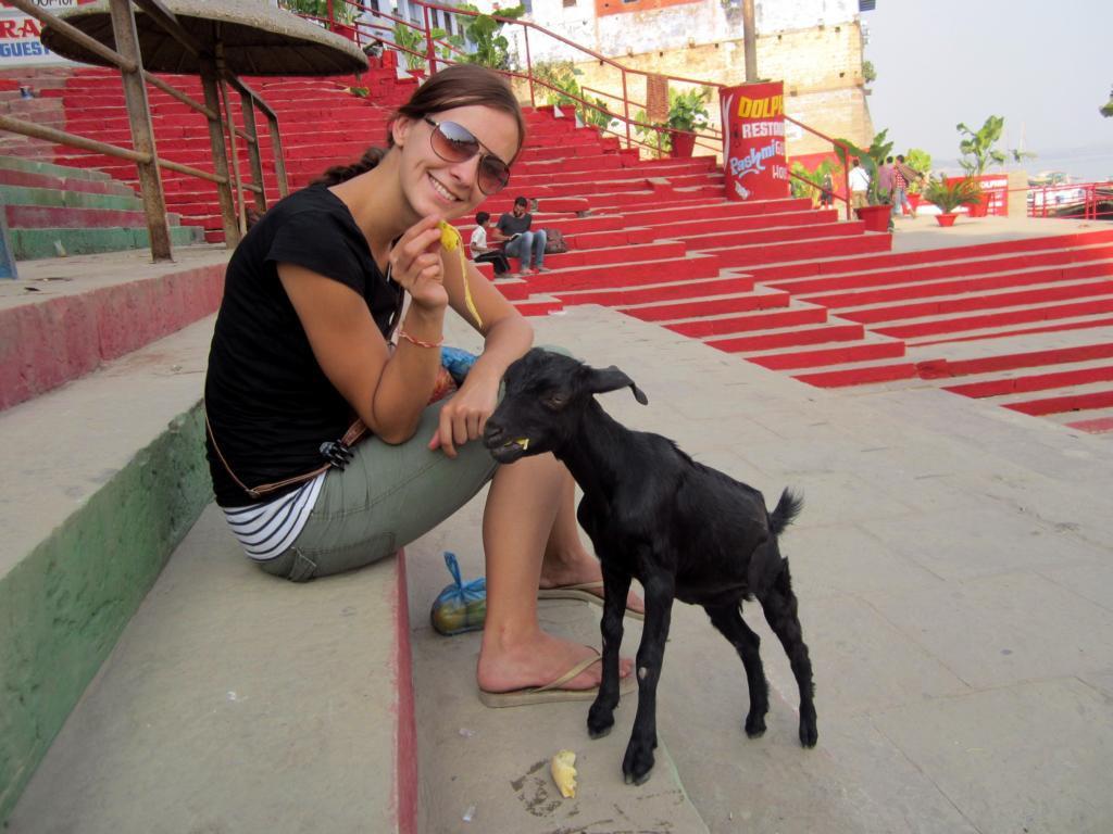 Auf Kuschelkurs in Indien? Der Ziege hat es gefallen :)