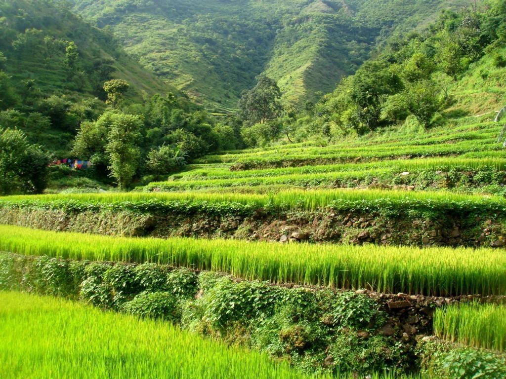 Reisfelder rund um Rishikesh: Unendliche Wandermöglichkeiten für Naturliebhaber.