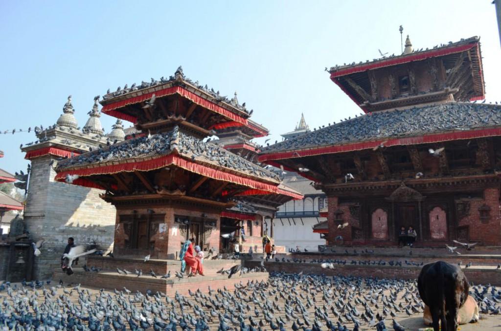 Tauben über Tauben beheimaten den Durbar Square in Kathmandu