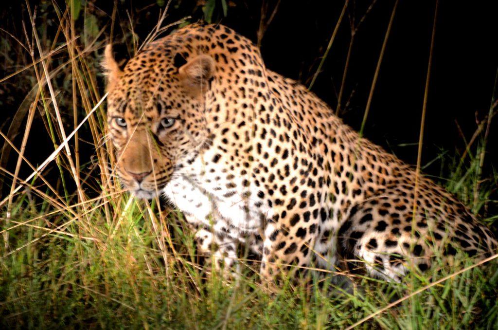 Nachtsafaris gehen nur im Rahmen einer geführten Tour.