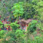 Papageien Lecke im Amazonas