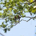 Papageien im Tambopata Nationapark