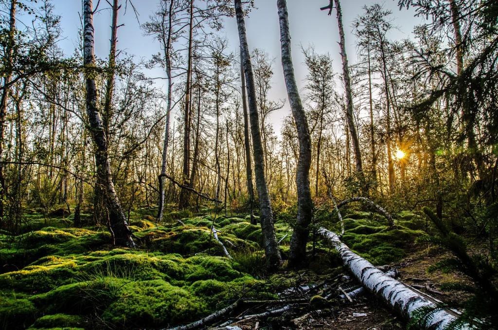Ein Wochenende im Schwarzwald: Natur genießen