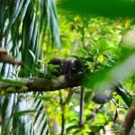 Dschungel im Bako Nationalpark