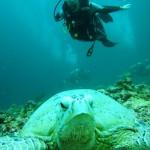 Isolde MaReisen mit Schildkröte bei Sipadan