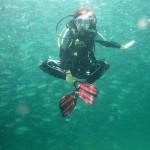 Isolde MaReisen im Makrelenschwarm