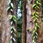 Im Regenwald auf Borneo