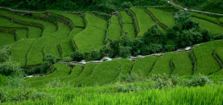 Blick auf die Reisterrassen