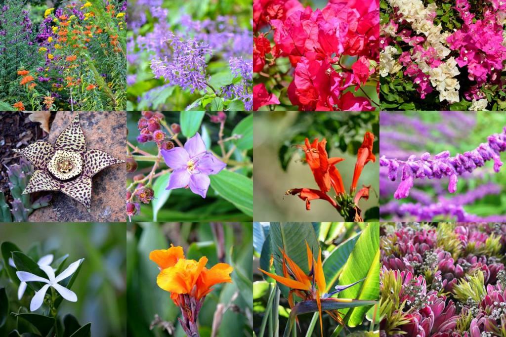 Blumenvielfalt in Kirstenbosch: Botanischer Garten am Fuße des Tafelbergs.