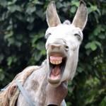 Funky Donkey - Ghandruk Nepal