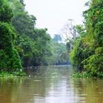 Flussafari auf Borneo
