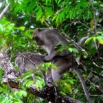 Ganz nah am wilden Tierleben: Naturparadies Borneo