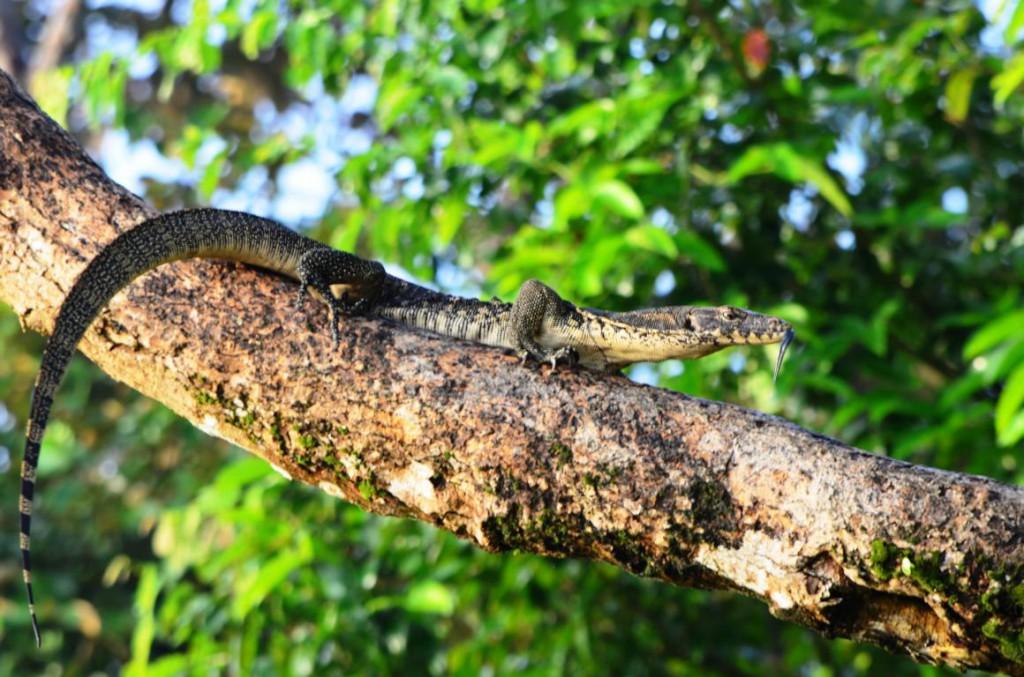 Flusssafari im Naturparadies Borneo: Hier trifft man auf Affen, Warane und exotische Vorgelarten