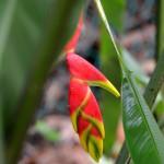 Ungewöhnliche Pflanzenarten im Naturparadies Borneo