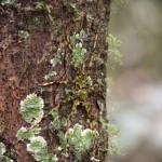 Perfekt getarnte Spinne im Naturparadies Borneo