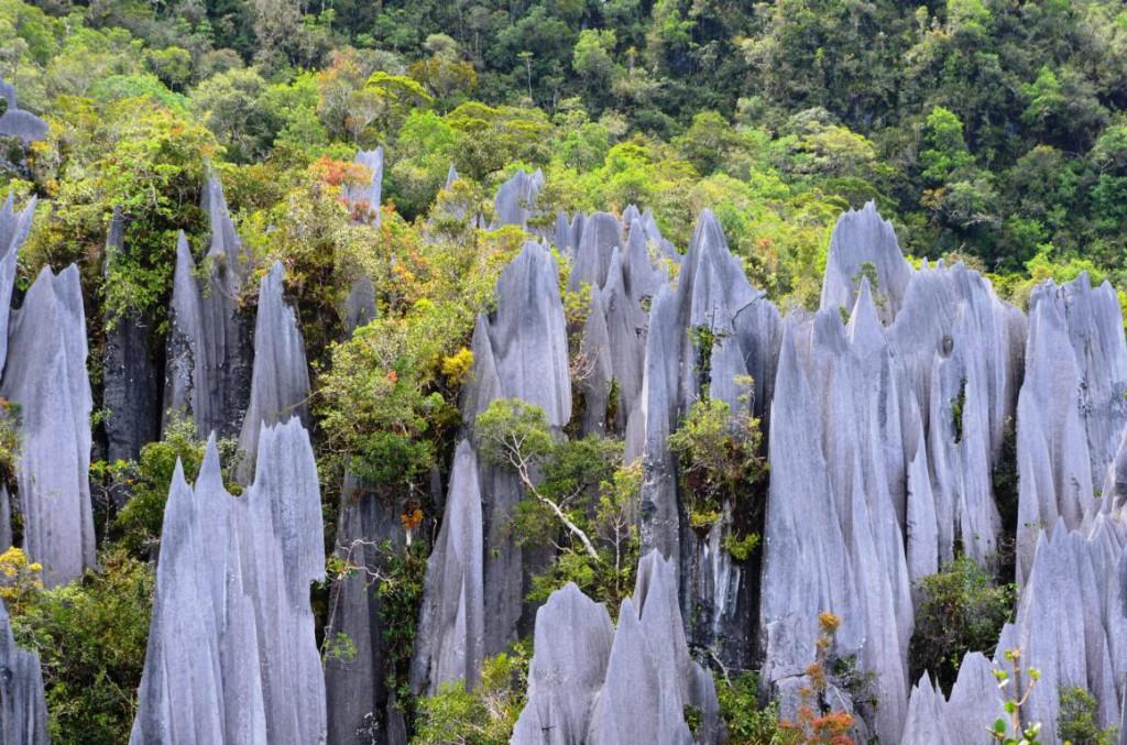 Naturparadies Borneo: Die Pinnacles sind ein Muss!