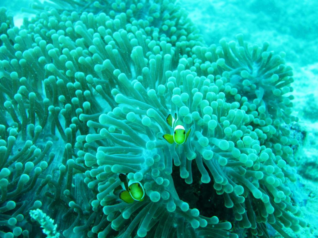 Finde Nemo: Auf Sipadan und Mabul Island geht das ohne Probleme!