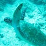Schildkröten im Naturparadies Borneo