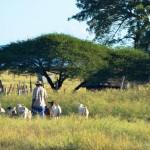 Kwazulu Natal in Südafrika