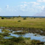 Sumpflandschaft des ISimangaliso Wetland Parks