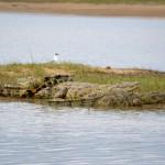Krokodile soweit das Auge reicht: St. Lucia Südafrika
