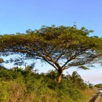Die Sumpflandschaft im ISimangaliso Wetland Parks