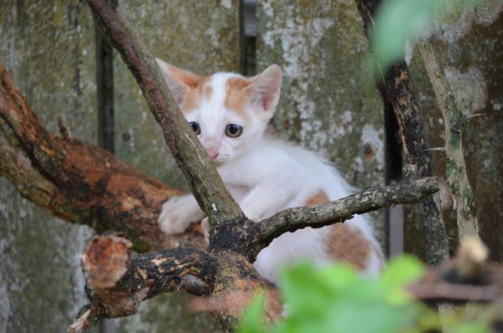 Kuching - die Katzenstadt. Katzen in Echt und als Denkmäler.