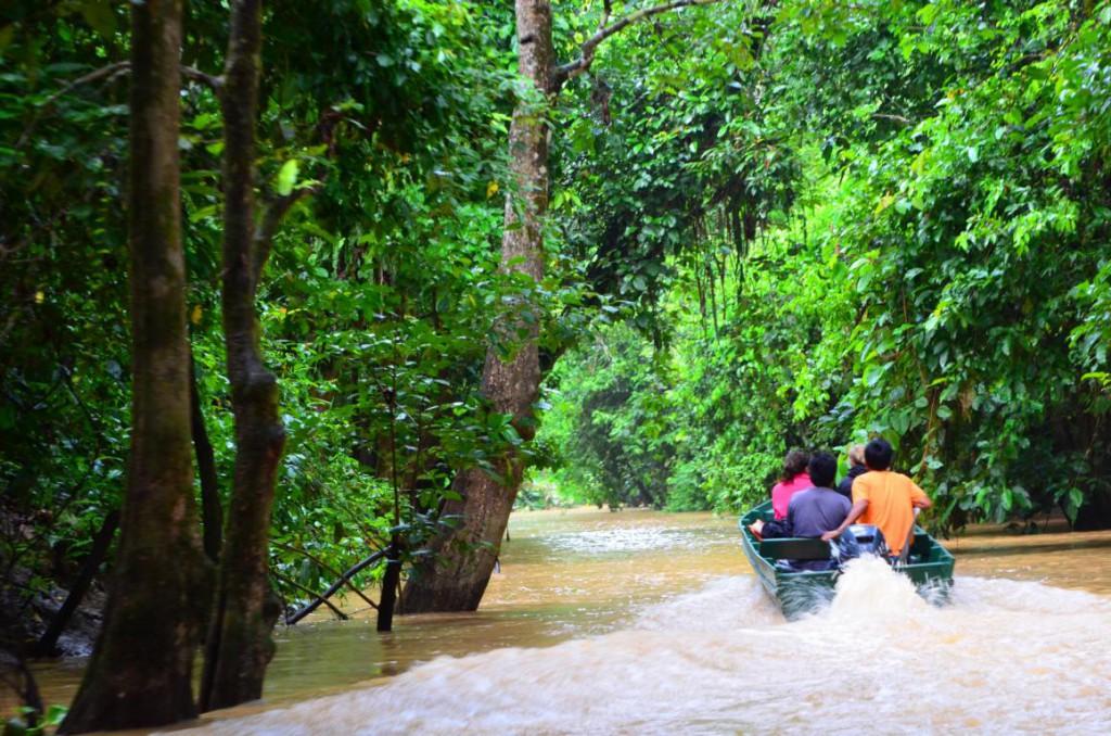 Flussafari auf dem Kinabatangan River: Sichtet Orang Utans und Co!
