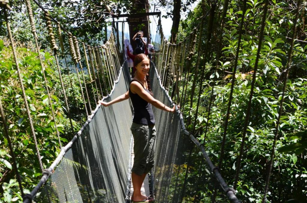 Canopy Skywalk: Über den Bäumen in schwindelerregender Höhe!