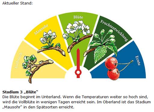 Jetzt oder nie: die Kirschblüte blüht! © http://www.fraenkische-schweiz.com/kulinarisch/kirschen/bluetenbaromenter.html