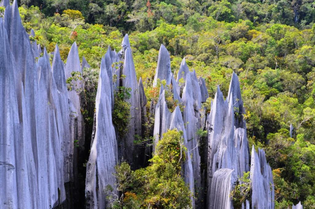 Die Pinnacles: Das Highlight des Gunung Mulu Nationalparks.