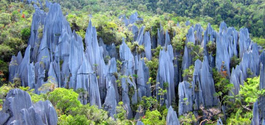 Die Pinnacles: Kalkfelsen im Regenwald.