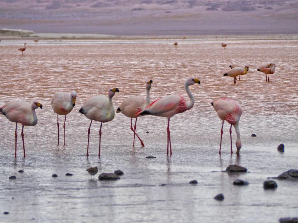 Das Highlight, das bei keiner Bolivien Reise fehlt, sind die Salzwüsten von Uyuni. © Kerstin & Constantin - 2malweg.de