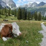 Über Almwiesen geht es zur Faleknhütte - erster Übernachtungspunkt auf der Hüttenwanderung Karwendel.
