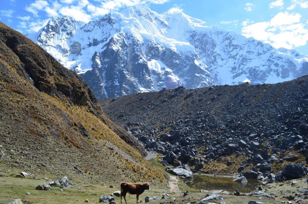 Trekking in Peru: Blick auf den Apu Salkantay.