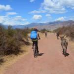 Mountainbike zwischen Eseln und Schweinen in Peru.