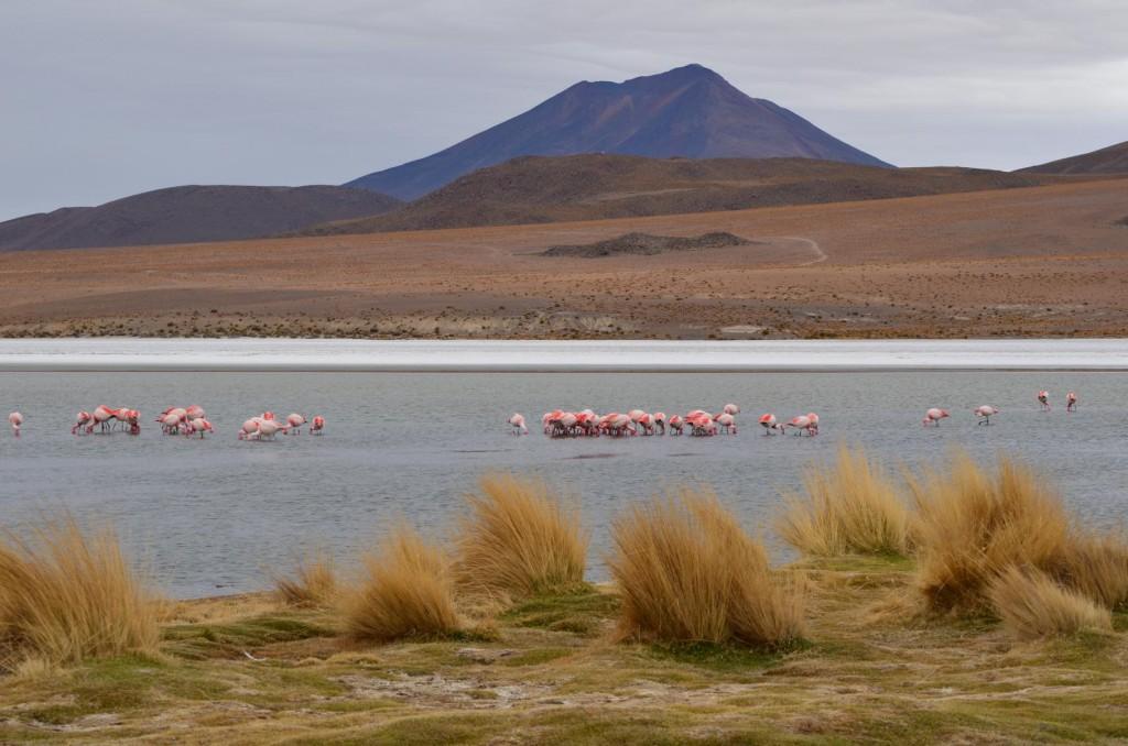 Laguna Cañapa: Eisig kalt und wunderschön!